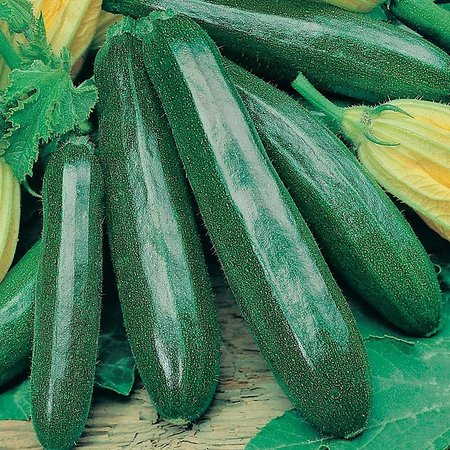 Courgette Black Beauty (zaad)