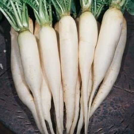 Daikon Minowase Summer Cross (zaad)