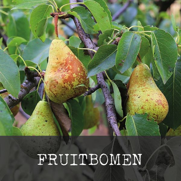 fruitbomen-homepage